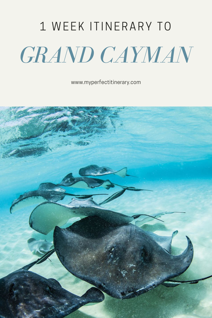 1 Week Itinerary to Grand Cayman, Best island in the cayman islands, Guide to Stingray City, Holding a wild stingray in Stingray City Cayman Islands