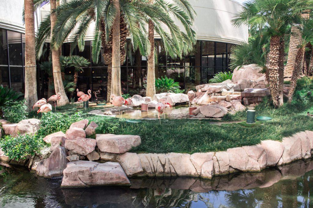 Las Vegas Flamingo Habitat
