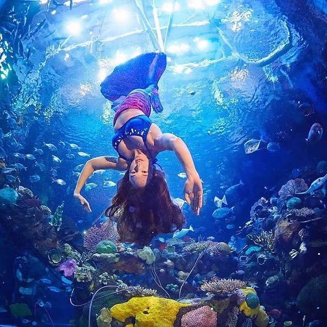 Mermaid Tank at the Silverton Casino