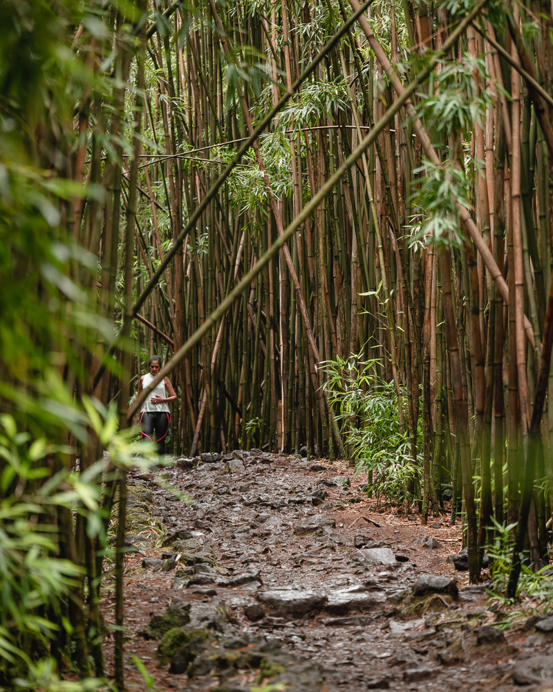 Bamboo Forest on the Road to Hana in Maui