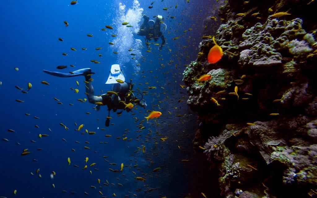 Scuba Diving lessons in Kaanapali Beach